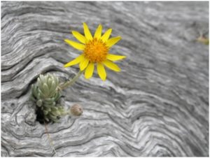 Flower in the dry trunk - Patagonia - Argentina - ©Antonio De Azevedo Negrão -Dreamstime.com